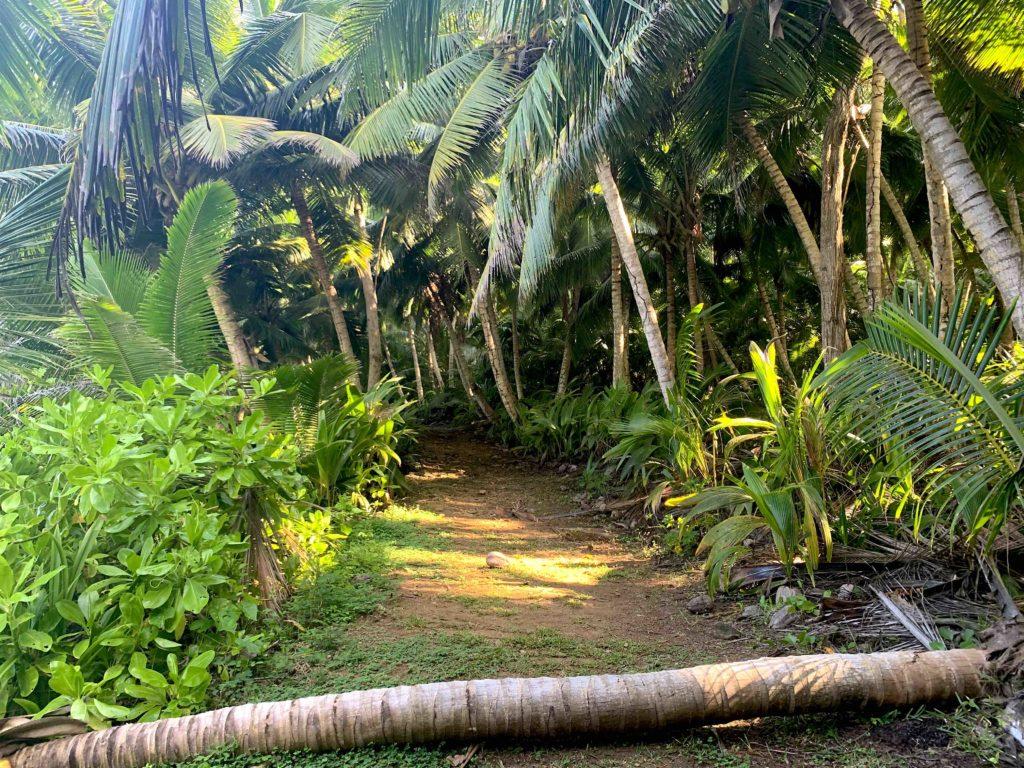 Der Dschungel auf Silhouette Island