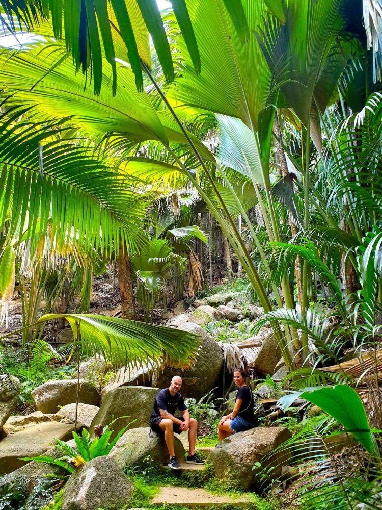 Praslin Fond Ferdinand unter Palmen
